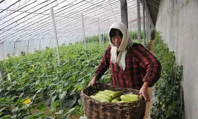 最强的叶面肥配方,磷酸二氢钾加上它,抗寒性提高8倍