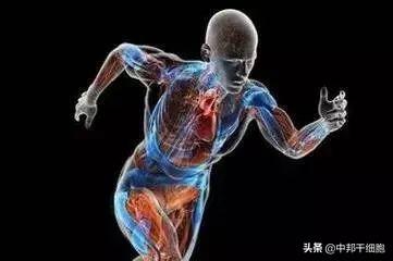 人体新陈代谢和能量转化都有干细胞的功劳