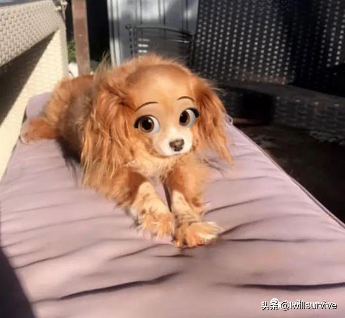 国外网友分享狗子用了迪士尼滤镜之后的样子,实在太可爱