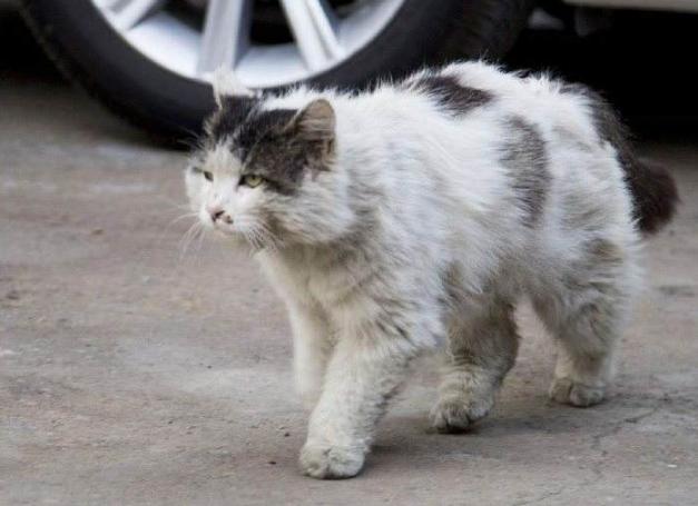 """被猫抓了一下会得""""狂犬病""""吗?"""