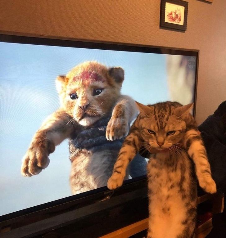 20張貓咪搞笑圖片證明:養了貓的日子,天天都像在看喜劇