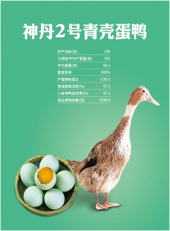 """一企""""三芯""""突破""""卡脖子""""技术 神丹公司科研团队获奖50万元"""