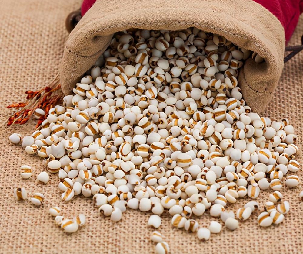 生熟薏米,祛湿效果大不同,你吃对了吗?