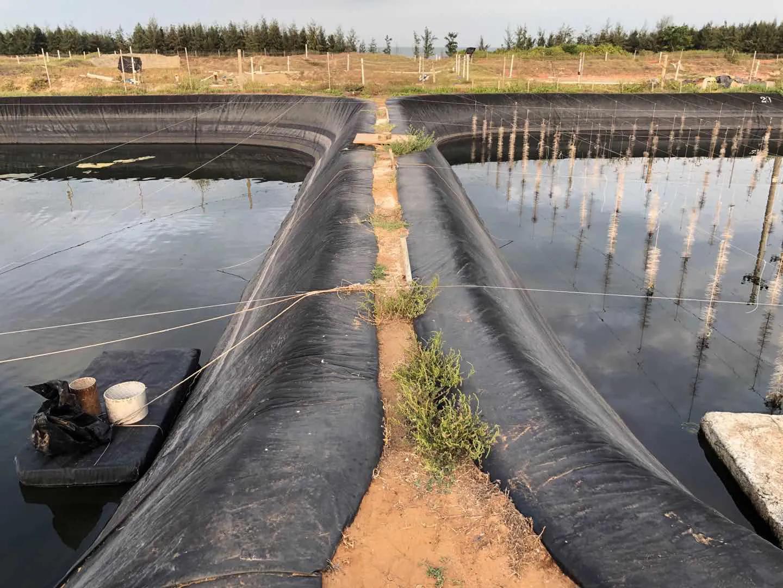 高位池水产养殖尾水处理