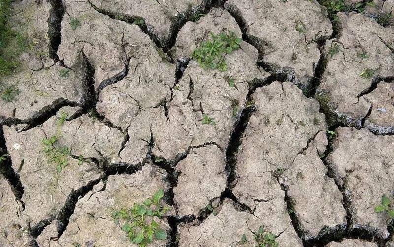土壤板结、紧实,耕层变浅怎么才能有效解决?
