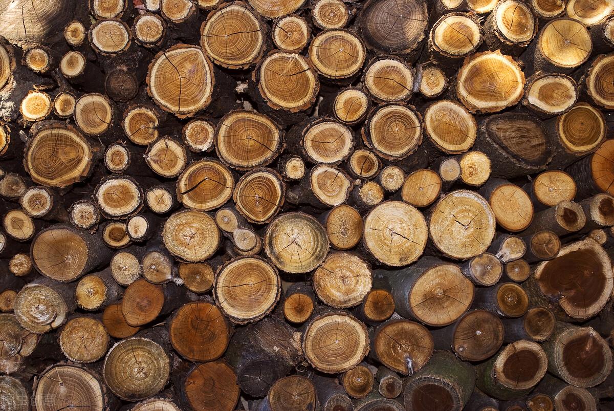 美國木材價格上漲了2倍,最大用途是什麼?