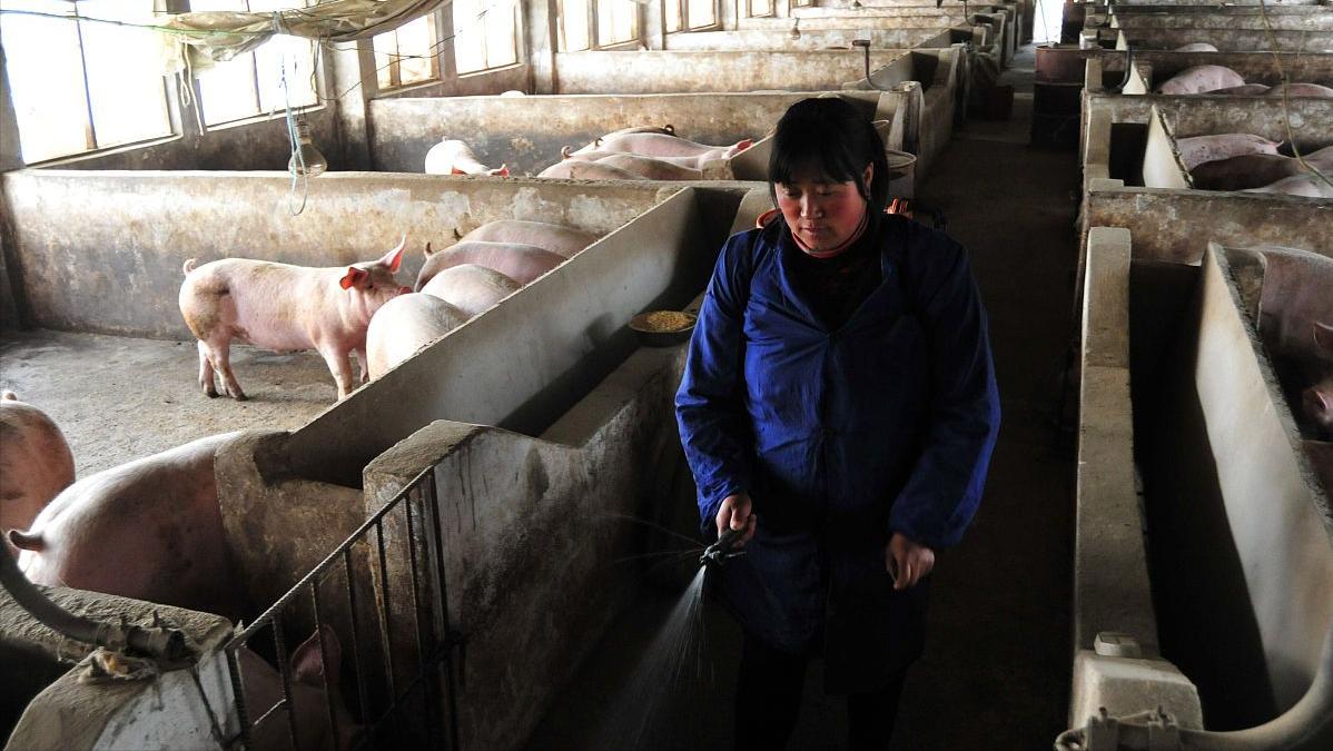 猪价惨遭霸凌,14日行情大变脸,养殖户恐惧的还是到来了