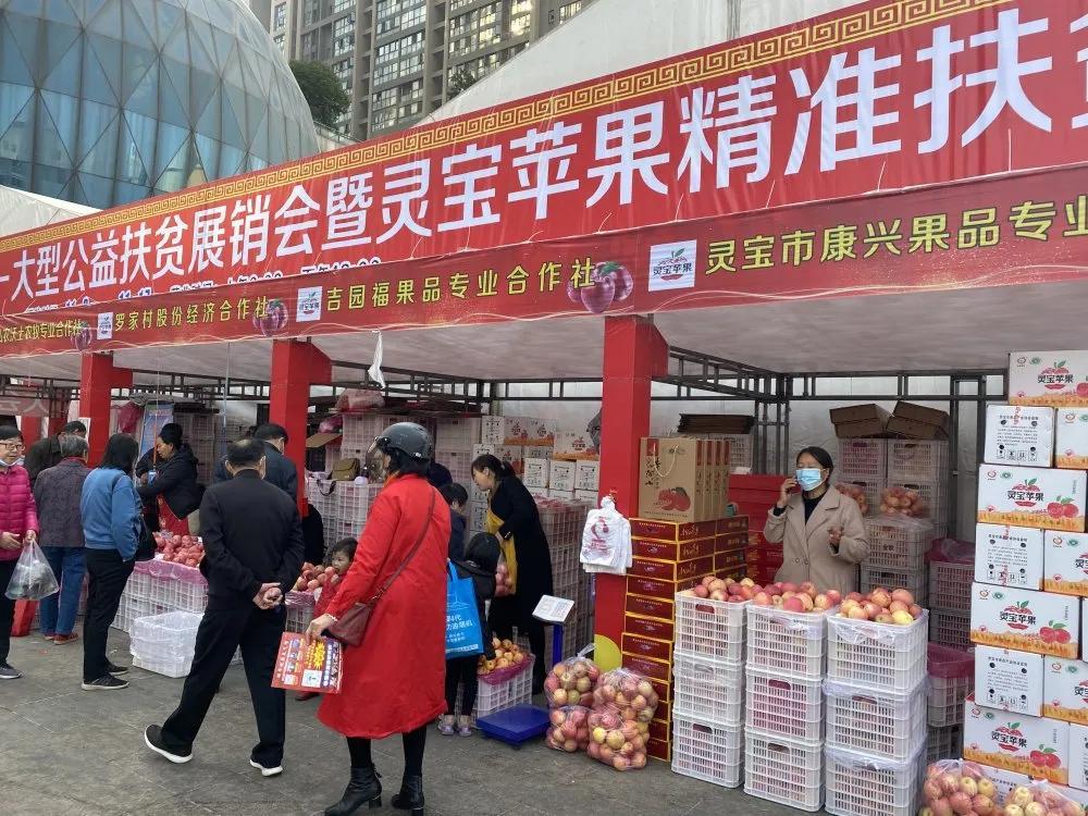 郑州凤凰GD视讯平台助力灵宝贫困果农,8天销售灵宝苹果突破22万斤