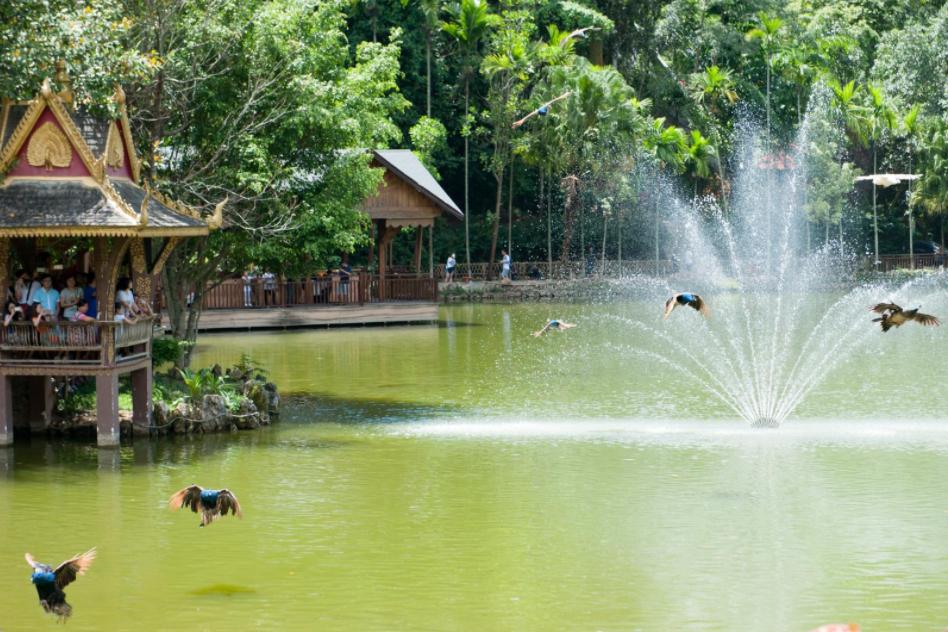 大型原始森林公园,位于云南,占地25000亩,门票45元