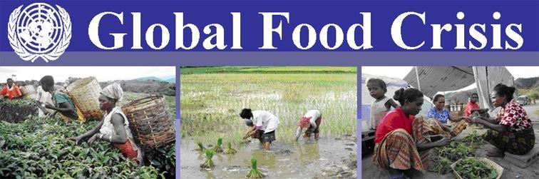 世界爆发50年最严重粮食危机!国际粮价暴涨,中国受影响吗?