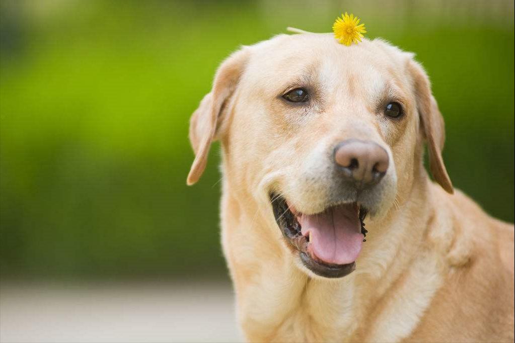 狗狗一生最重要的5件事,你可能已经做到了