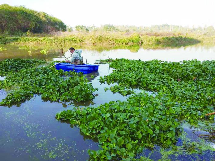 云龙龙头铺街道:河湖洁净行动, 已清除水葫芦500余吨