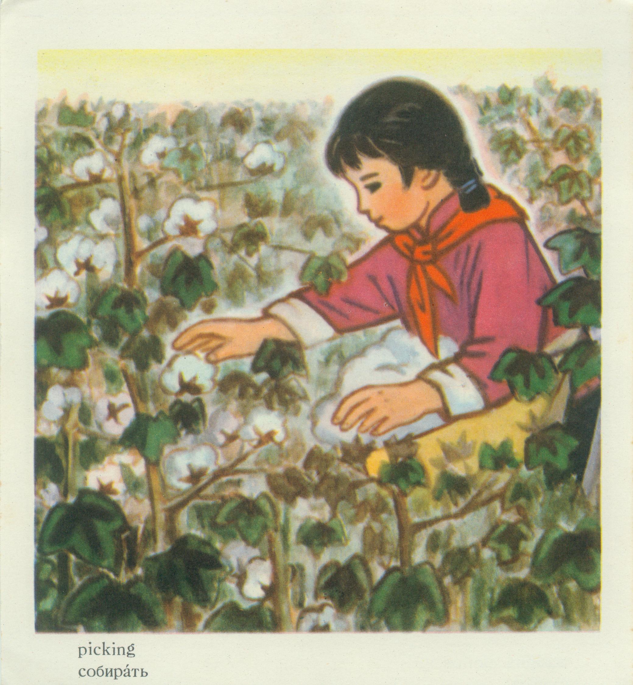 五十年代小学英语学习卡片(上)