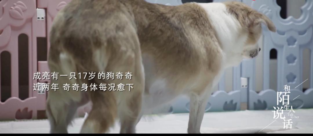 宠物医院的人间百态:北京兽医骂哭宠物主人,却治愈了无数人