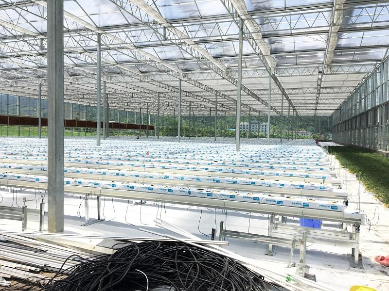 拒絕高大上價格親民的無土栽培基質如何選擇,蔬菜大棚如何種植