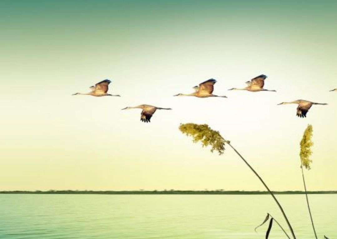 周公解梦:梦见自己飞翔,轻松惬意,压抑无助?