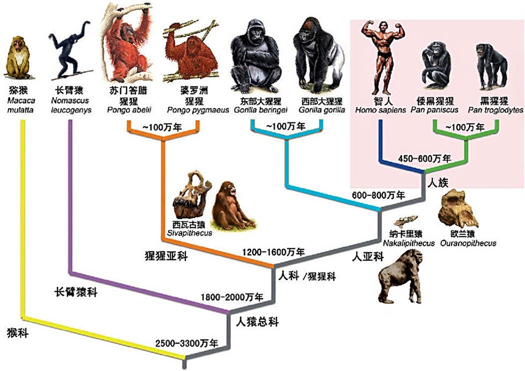 地球上最初没有人,那第一位女人和男人是如何诞生的?