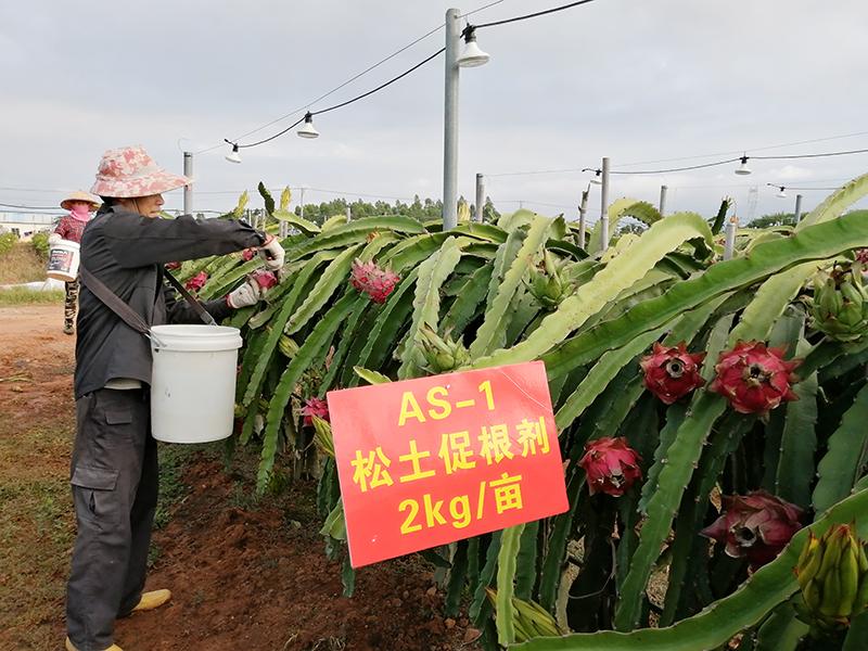 松土促根技术在海南土壤改良效果显著