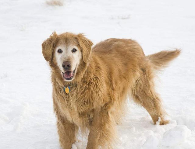 狗狗不能陪你一辈子,你却可以让它安度晚年,狗狗衰老的5个症状
