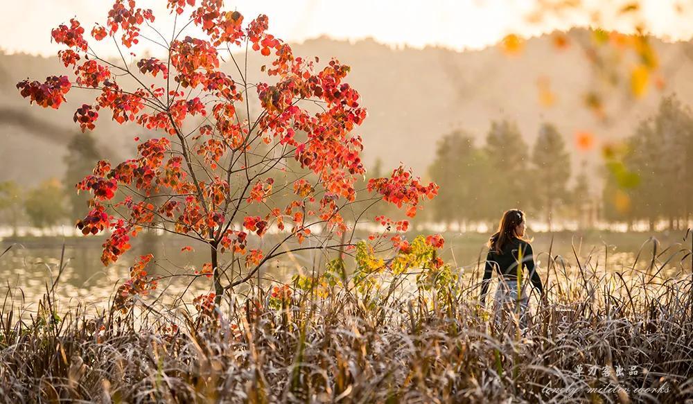 武汉这个漫长的秋天,是大自然馈赠的礼物啊