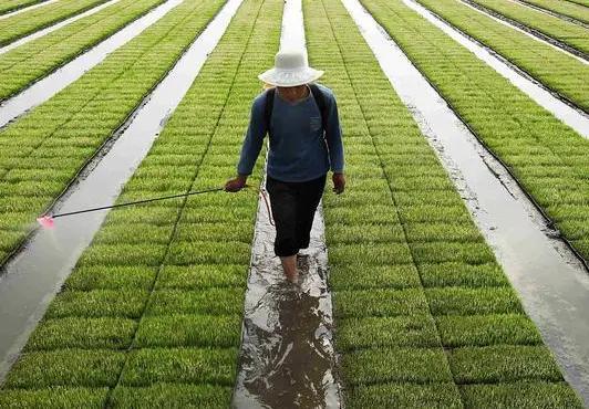 是农民就会种地吗,给你几亩地,你知道如何种庄稼吗