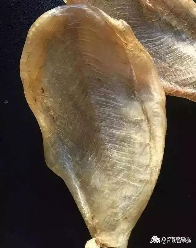 涨知识!鱼胶种类大全,不看亏大了!