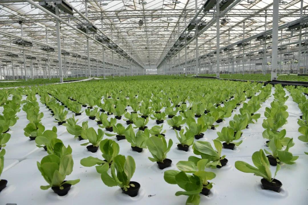 未來農業什么樣?楊凌智慧農業帶你探究竟