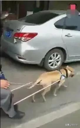 男子讓狗狗拉車逛街,還向人炫耀