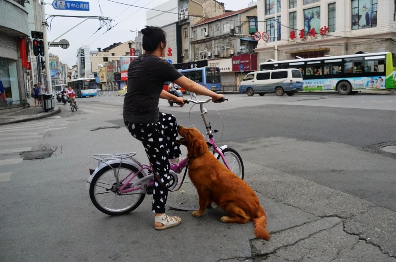 """带狗狗出门遛弯,不能做这五件事,真的很伤""""狗身"""""""