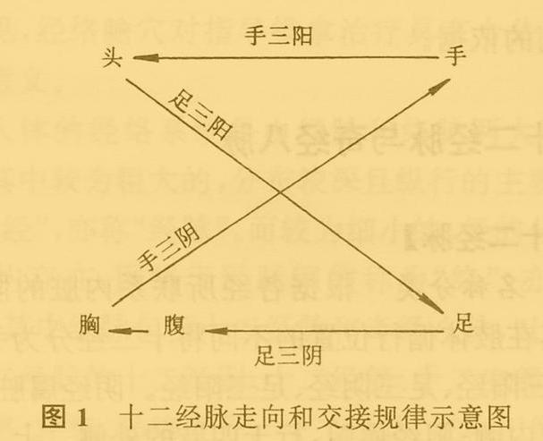 中医推拿之十二经脉详解图(附具体穴位定位和经脉走向)