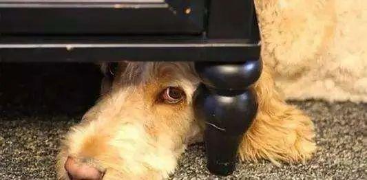 狗狗最害怕的4件事,每一件都像要了它的命