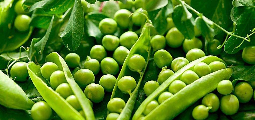 夏季要多吃這5種豆類蔬菜,清熱解饞營養好,附上它們的詳細做法