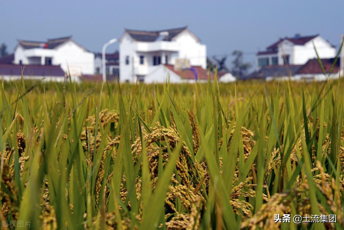 2021年水稻种植补贴最新政策:每亩补贴多少钱?