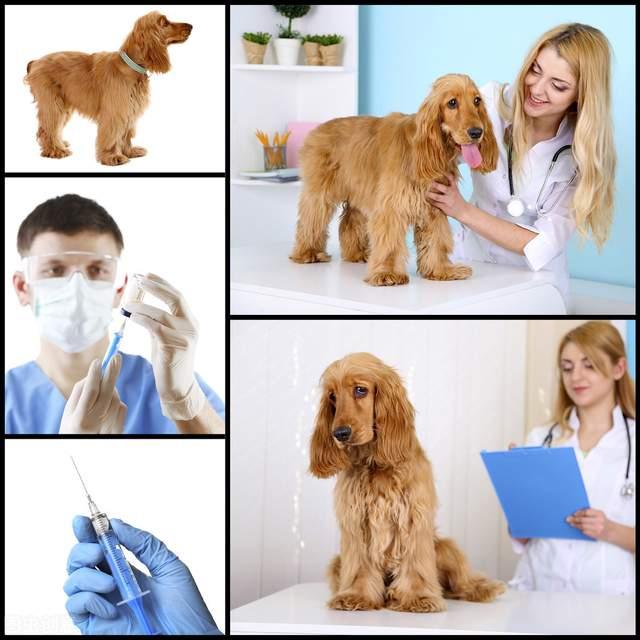 狗狗这些病,会传染给人,注意了