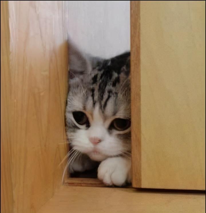 """猫咪犯错有以下行为,说明它在""""认错"""",原谅它吧"""