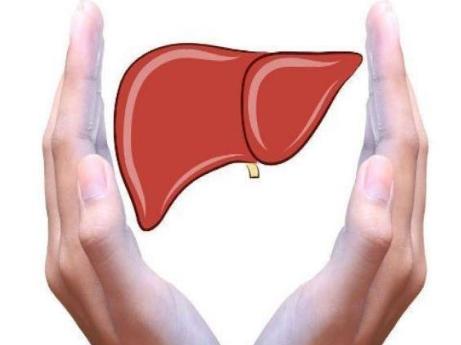 养肝保肝的六大秘诀,有效预防肝腹水,你记住了吗?