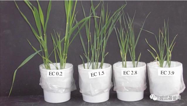 地驰素-降盐生根,四水定高产