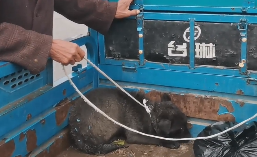 河南:風雨中狗狗被老人從狗肉車上救下,狗販子欲反悔狗狗直髮抖