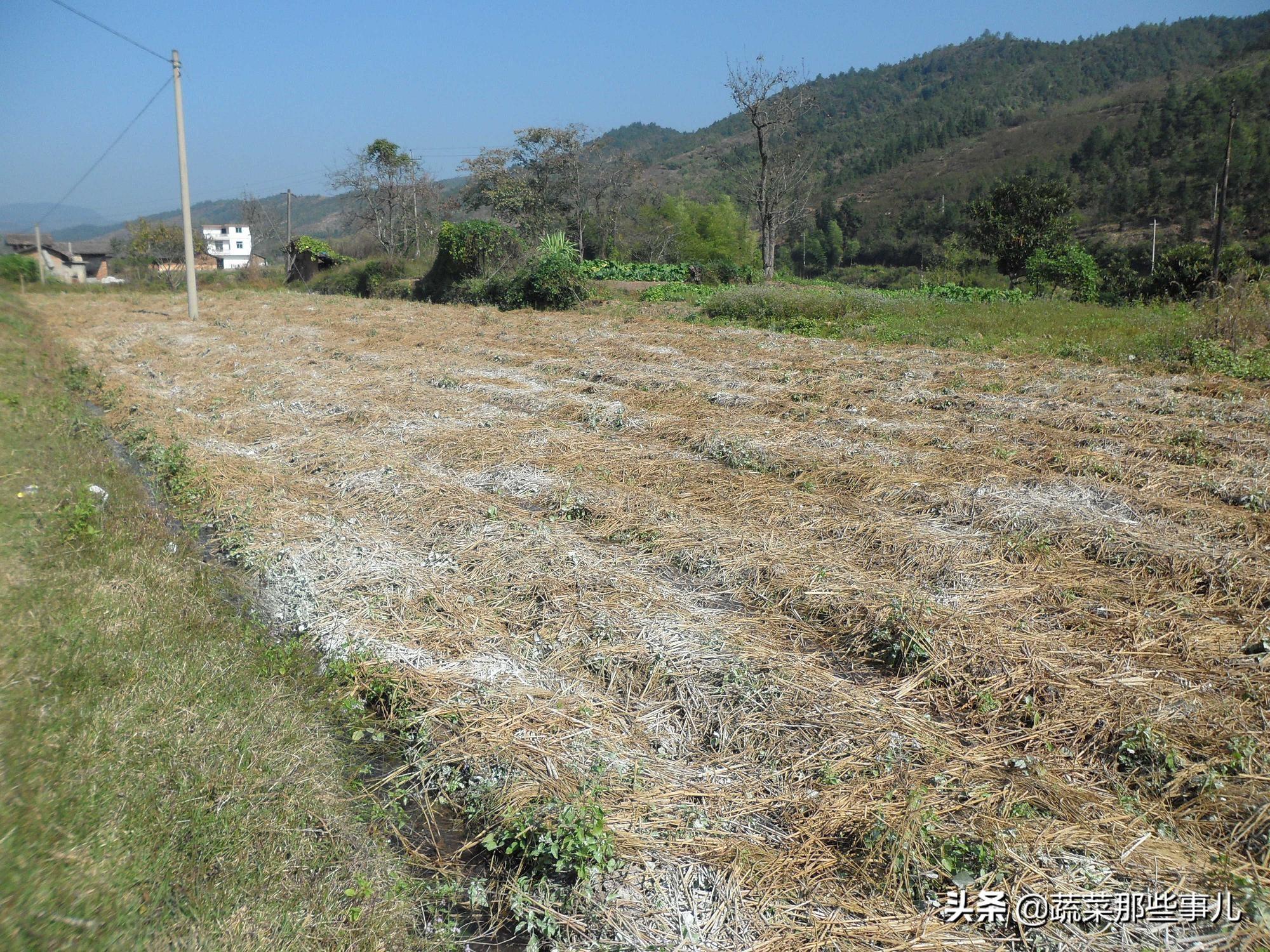 生石灰用途广,杀菌杀虫、改良土壤具体应该怎么用?
