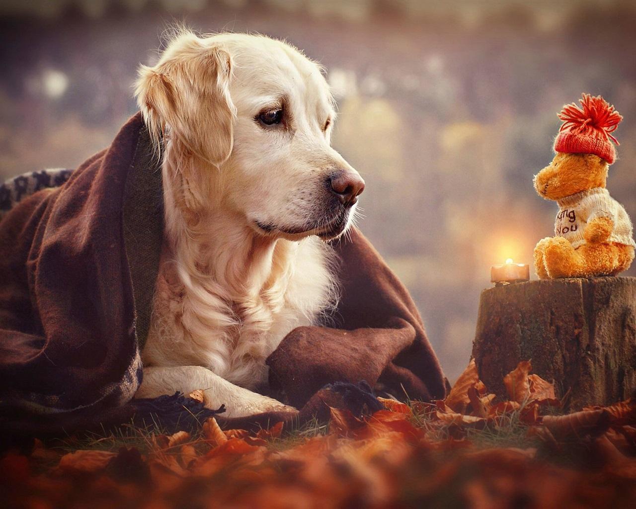 """养狗前和养狗后到底有啥变化?生活""""万劫不复"""",实在是太扎心了"""