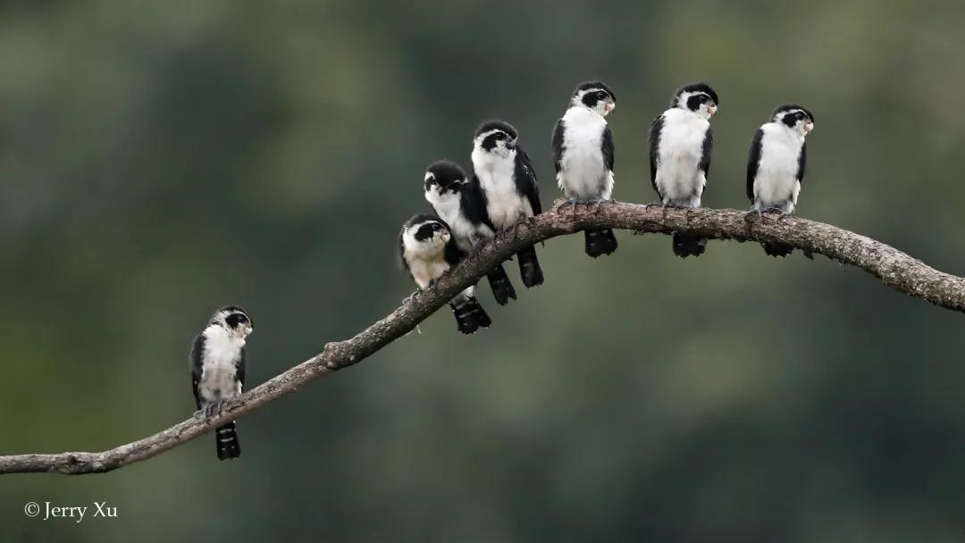 去年一年,《国家重点保护野生动物名录》中,我们拍到了多少?