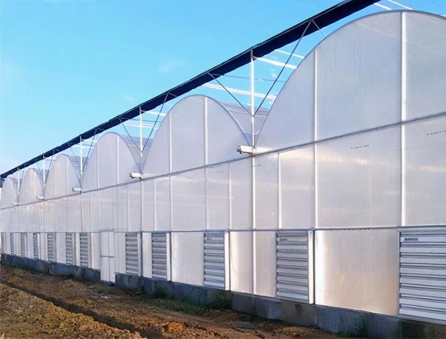 北方冬季蔬菜大棚种植与养护技术
