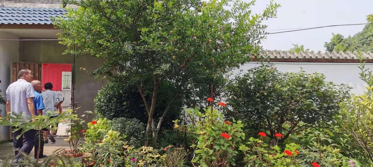 格桑花与百日菊共同的花语