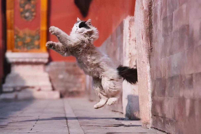 故宮裡有近200只貓,為什麼旅遊時卻看不到,原來它們才是這的王