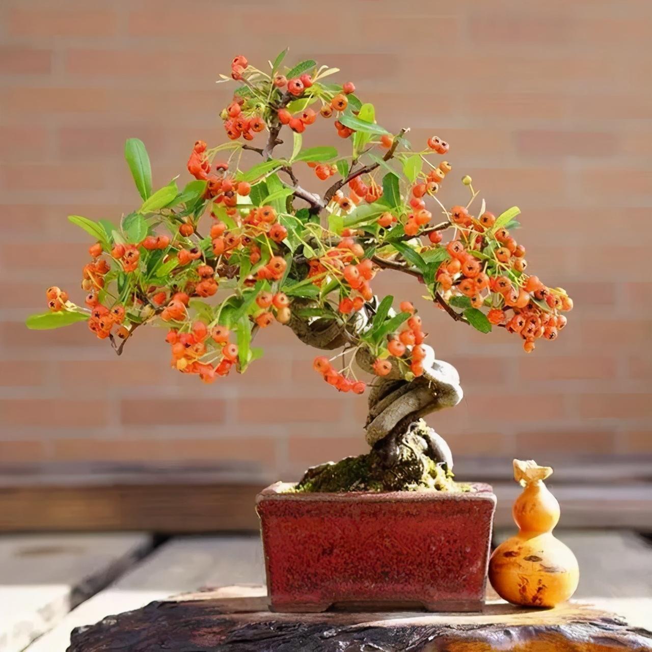 �G植�B�o中�^花植物�c�^果植物的�x�衽c��用――武�h�G��@林