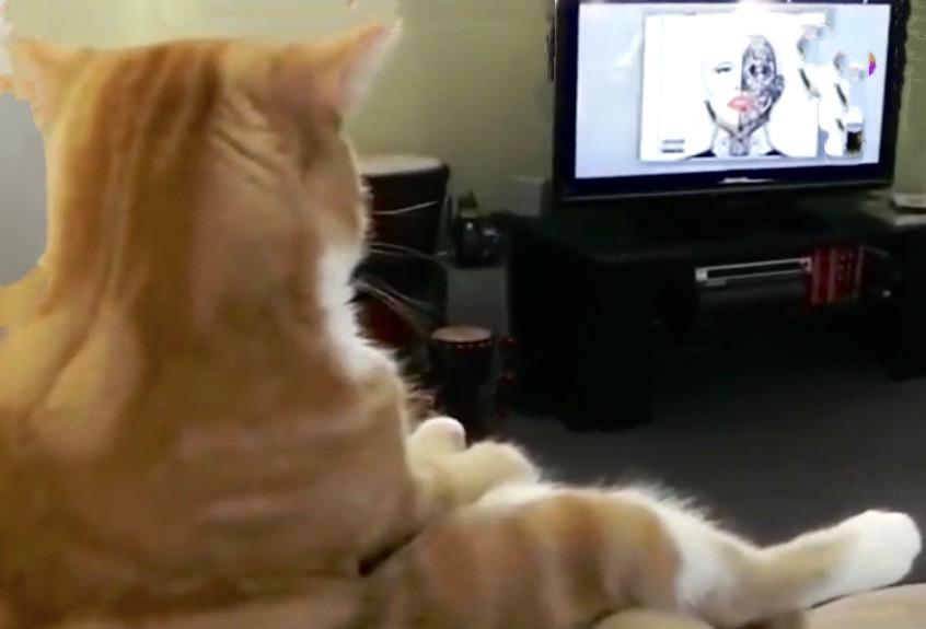 """什么?你家的猫咪竟然爱看电视!还不赶快送它去""""高考"""""""
