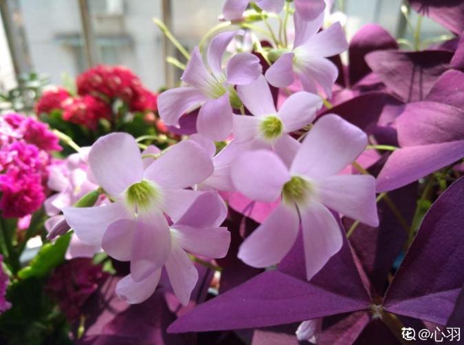 10个养花常识,杜绝黄叶落叶,花儿蹭蹭长 家务卫生 第4张