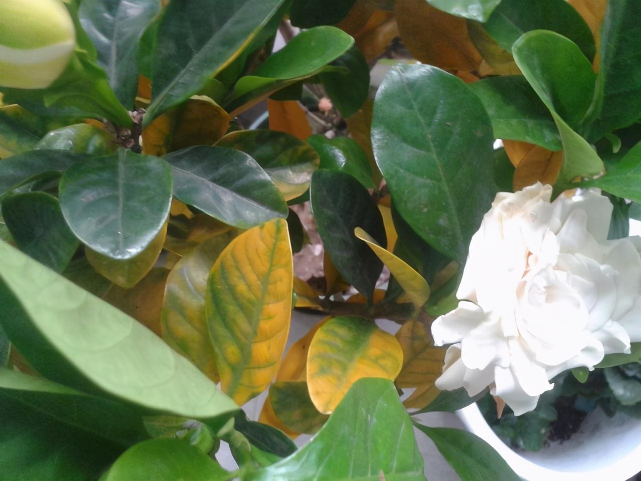 """4月养花,浇水别踩""""4个坑"""",要不然植物黄叶、枯枝、落花苞 家务 卫生 第5张"""