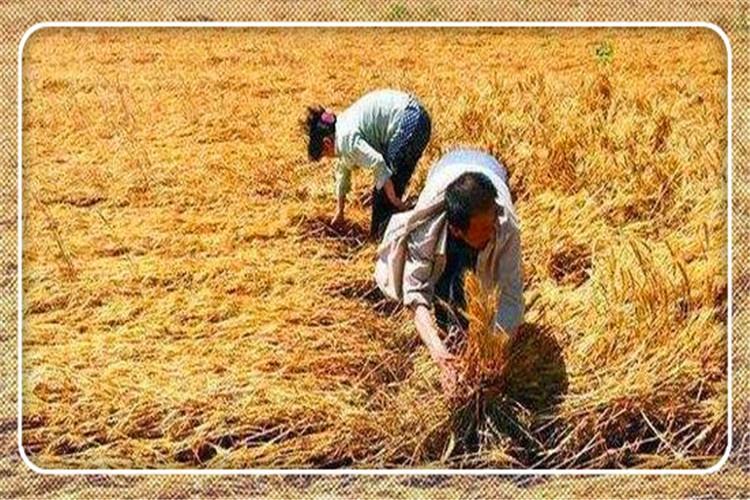 目前的农村,为什么会出现大片的荒芜土地?分析一下