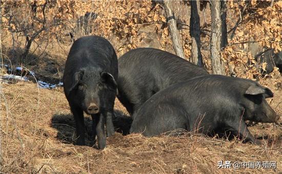 农业农村部:要求加快清理超范围划定的限养禁养区